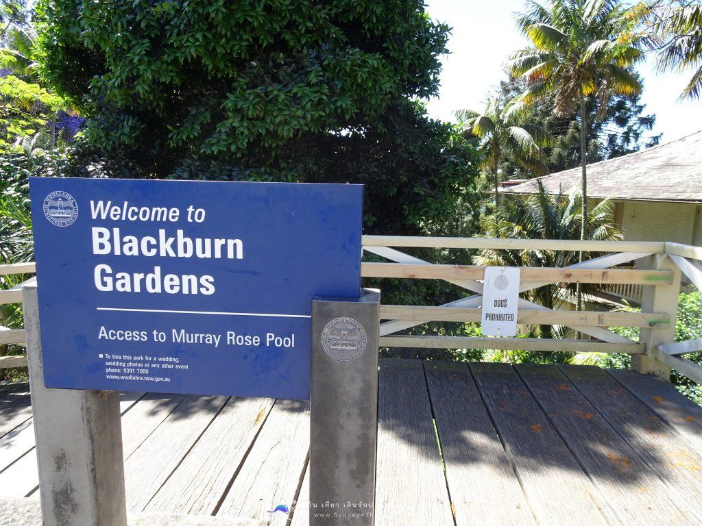 ท่องเที่ยว SYD เล่นน้ำ Murray Rose Pool Blackburn Garden