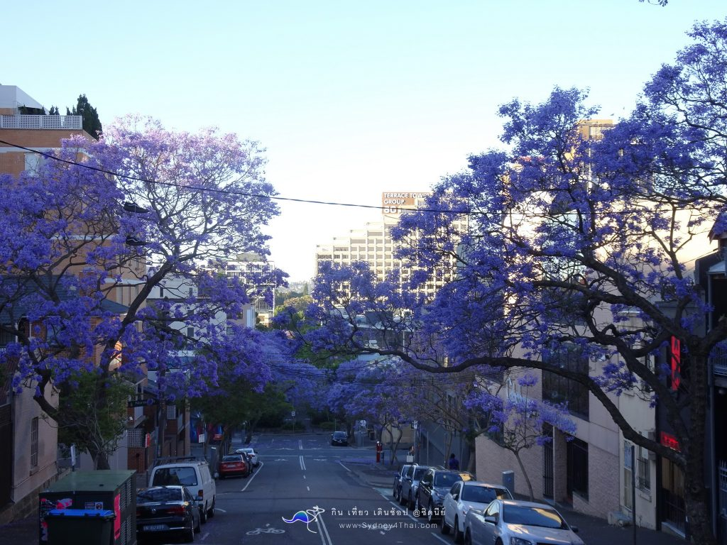 Best Jacaranda Oxford St. Sydney