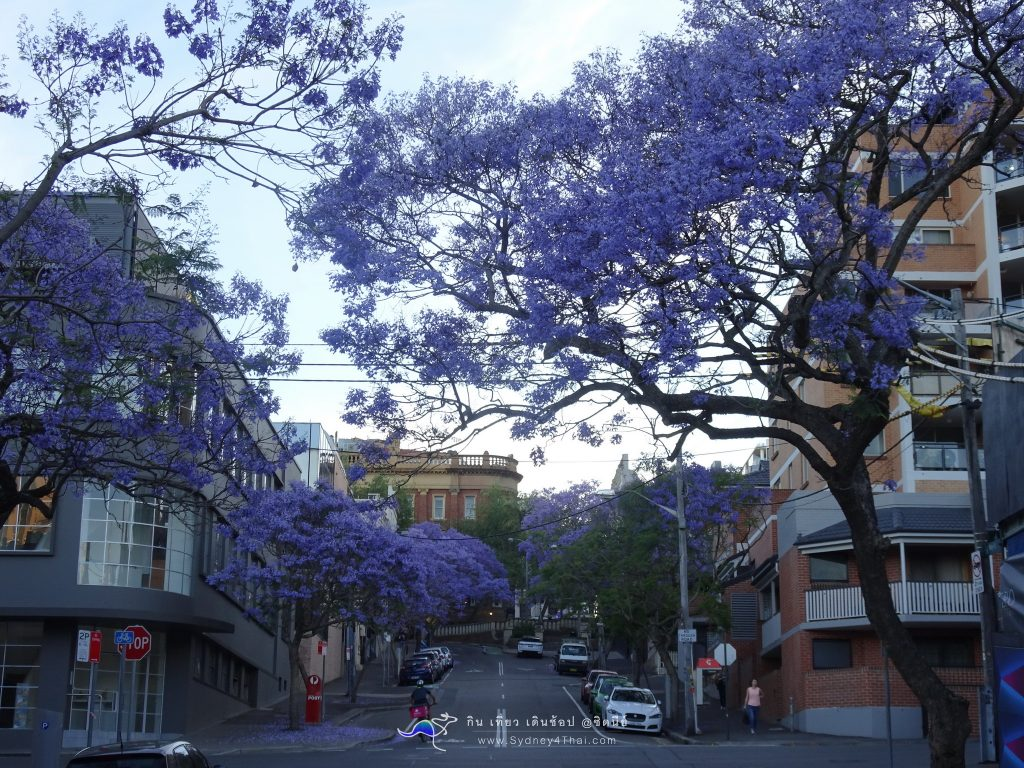 All Best Jacaranda Oxford St. in Sydney
