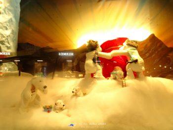 ชมหมีโพลาที่ SYDNEY เทศกาล Christmas