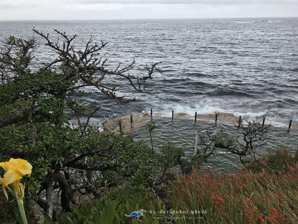 ทะเลซิดนีย์ McIvers Baths Coogee Beach 004