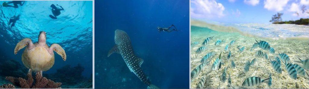 สถานที่ท่องเที่ยวในออสเตรเลีย The Great Barrier Reef