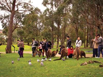 ชมสัตว์ป่า Australia เมลเบิร์น รัฐวิกตอเรีย Sovereign Hill