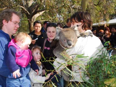 ชมสัตว์ป่า เที่ยว Australia เมลเบิร์น รัฐวิกตอเรีย Sovereign Hill