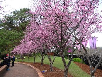 10 สถานที่ท่องเที่ยวซิดนีย์ ฤดูใบไม้ผลิ Japaneses Garden
