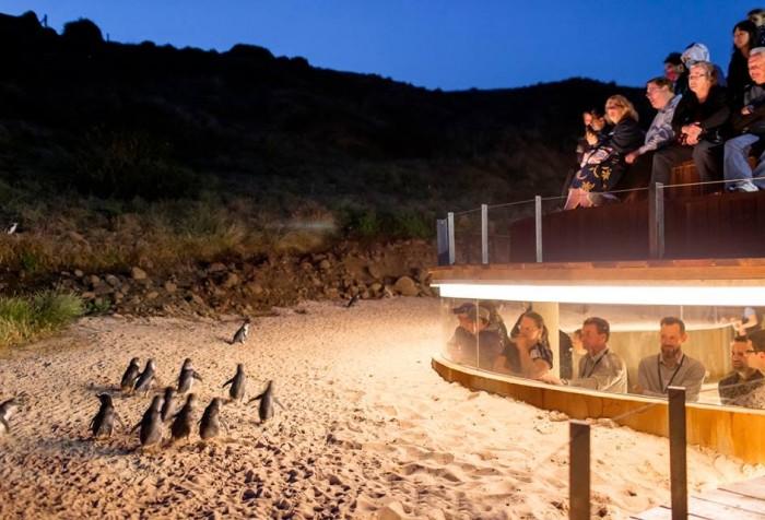 นกเพนกวินที่เล็กที่สุดในโลก เมลเบิร์น Melbourne