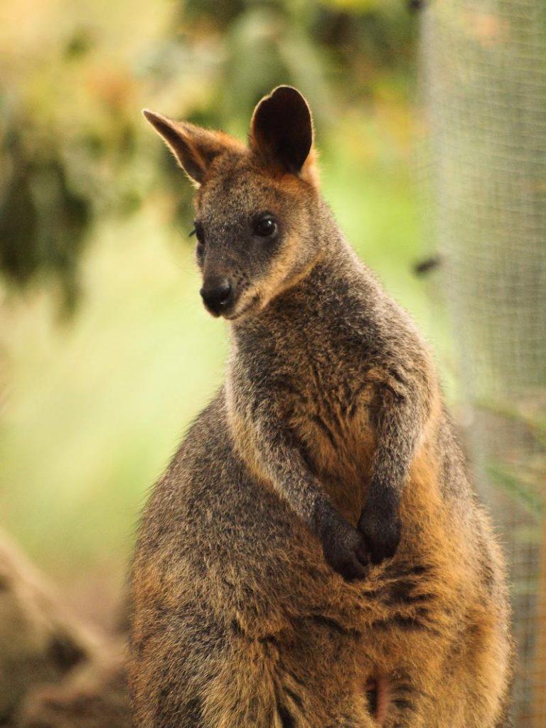 เที่ยวซิดนีย์ 1 วัน สวนสัตว์ Taronga Zoo 005