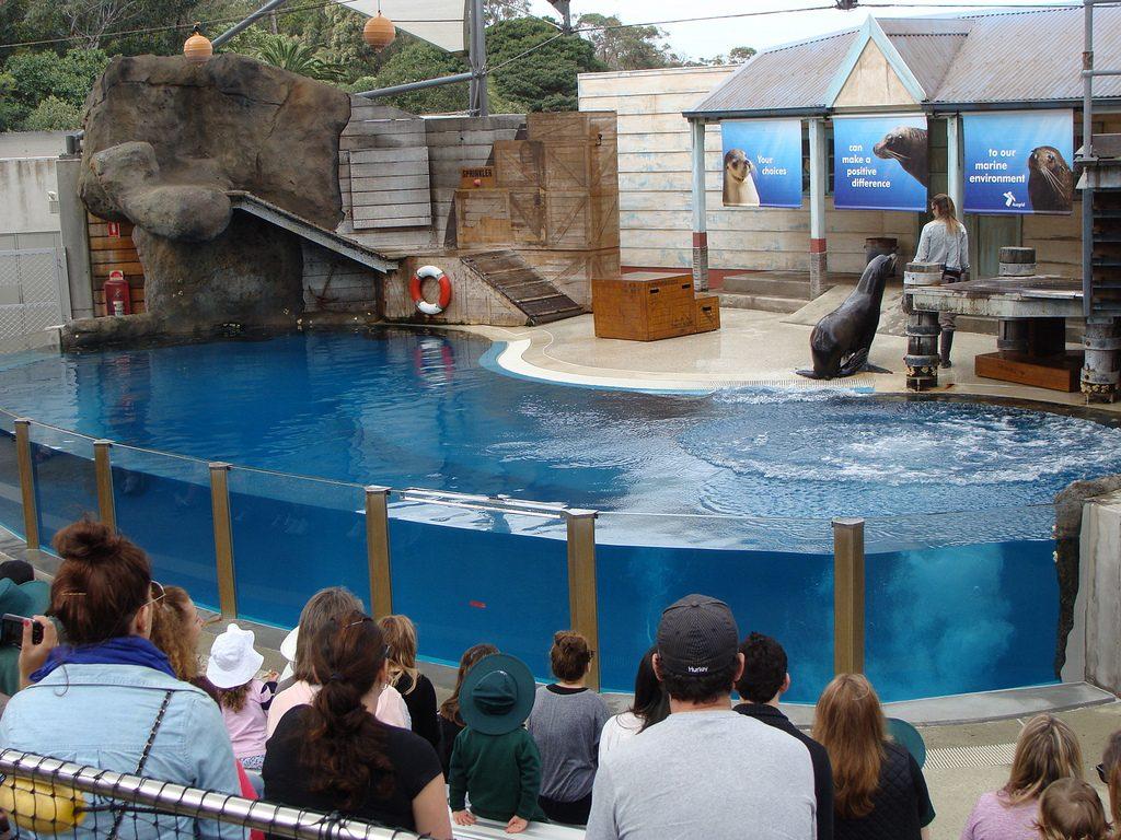 เที่ยวซิดนีย์ 1 วัน สวนสัตว์ Taronga Zoo 006