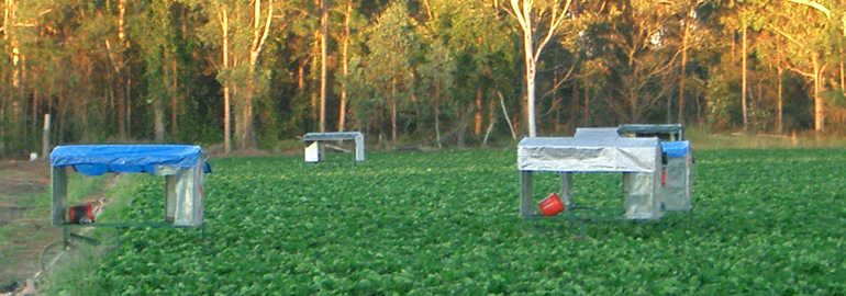 อยากไปทํางานต่างประเทศทำงานอะไรดี งานฟาร์มเก็บผักผลไม้