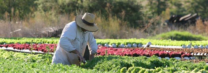 ฟาร์มออสเตรเลีย Dubbo
