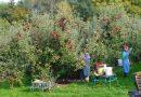 หางานฟาร์ม หางานเก็บผลไม้ แพ็คผักผลไม้สด