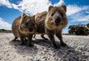 17 สัตว์สุดน่ารักในออสเตรเลียที่มาละลายหัวใจคุณ