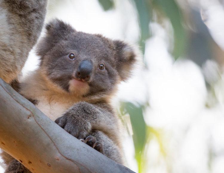 ไปเที่ยวออสเตรเลียช่วงไหนดีที่สุด 002