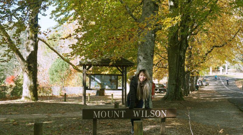 เที่ยวซิดนีย์ชมใบไม้เปลี่ยนสี Mount Wilson โดย Sandy ◕‿◕。