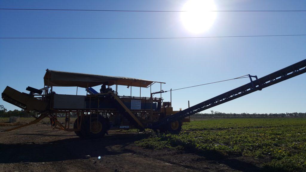 Farm ฟาร์ม ฟาร์มออส ฟาร์มต่างประเทศ หางาน ทำงาน งานออส